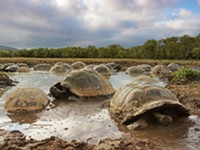 Gray's Reef Film Fest: Galapagos 3D is part of expanded 3D lineup