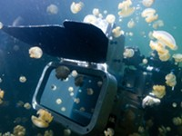 Gray's Reef Film Fest: The Last Reef focuses on beauty of coral, and threats to it