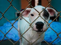 County considers changes to Animal Control ordinance