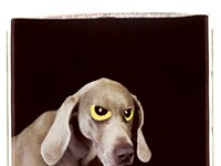 William Wegman's Weimaraners