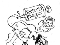 Will bacteriophages save us from the antibiotics crisis?