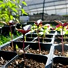 Grow, Eat, Repeat: Local company makes the most out of food waste
