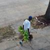 Plant thief sought