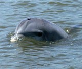 Uploaded by The Dolphin Project