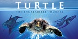c7d1f7a3_turtle_the-incredible-journey-2009_28991375236591.jpg