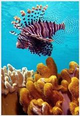 fffdc1af_lionfish.jpg