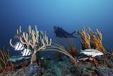 68dc47d4_gr-diver_sponges_gorgonians_and_fishes_fb.jpg