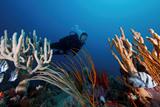 427b741e_divers_sponges_fish.png