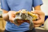 c5a1a5c7_2016-reptiles-2.jpg