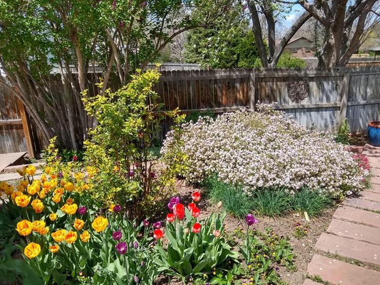 Liz Gardener practices xeriscape at her own home. - LIZ GARDENER