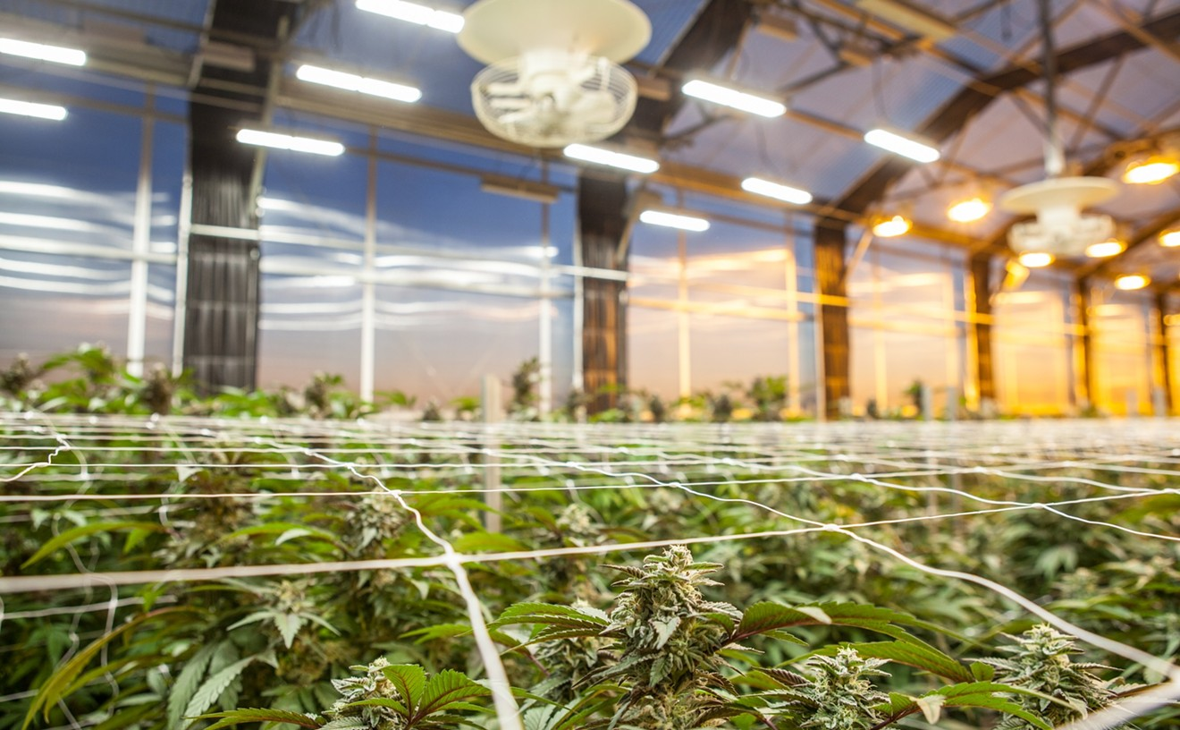 Marijuana research has been federally legal in Israel for decades.