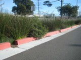 NATE SELTENRICH - A bioswale in West Berkeley helps to absorb and filter stormwater runoff.