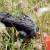 Altamont Bird Slaughter Worsens