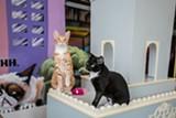 BERT JOHNSON - Adopt a furry friend at Cat Town Cafe.