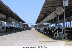An Aurora factory farm in Texas.