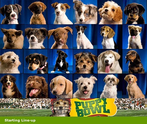 Animal Planets Puppy Bowl premieres Sunday, February 3.