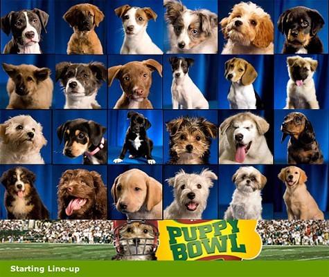 Animal Planets Puppy Bowl premieres Sunday, February 3.