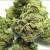 Ask Legalization Nation