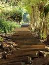Berkeley's Northgate Path