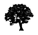 black_oak.jpg