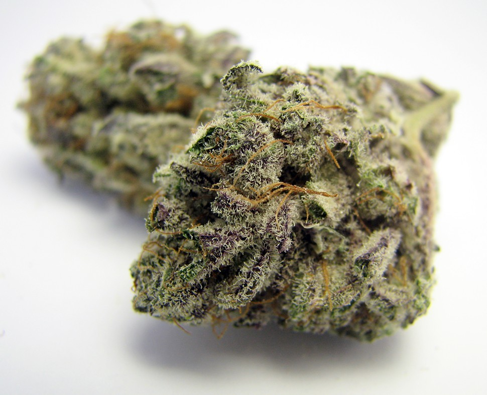 Blackberry Kush from Green Remedy Collective returns to Richmond