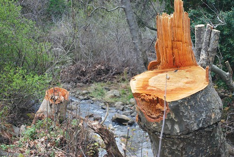 Caltrans wants to cut down more trees along Alameda Creek.