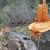 Destroying Alameda Creek