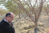 JOAQUIN PALOMINO - Dan Errotabere, a Westlands farmer, may have to let some of his almond trees die this year because of the drought.