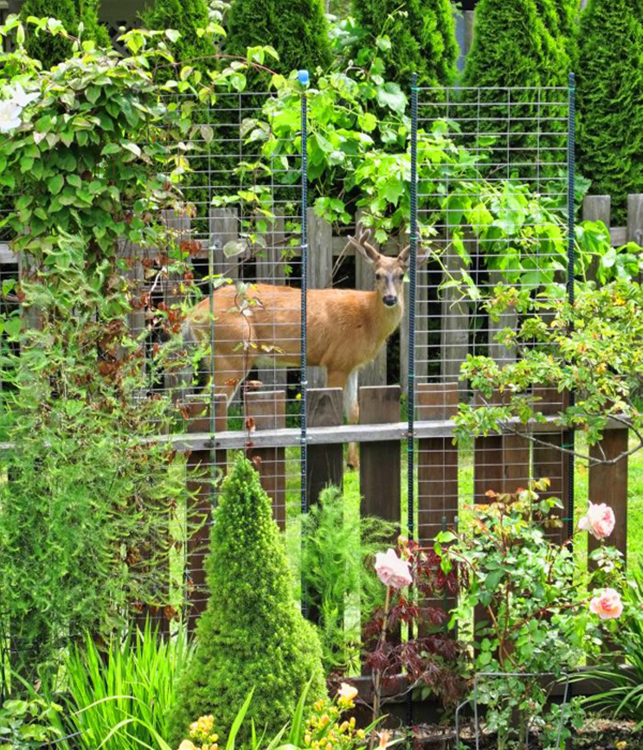 How To Animal-Proof Your Garden