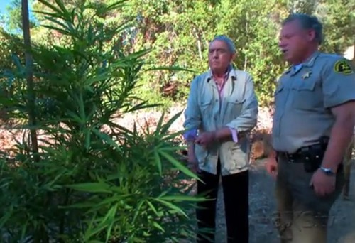 Former CBS anchor Dan Rather tours a Northern California marijuana farm for AXS.TV