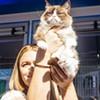 Grumpy Cat Comes to Berkeley
