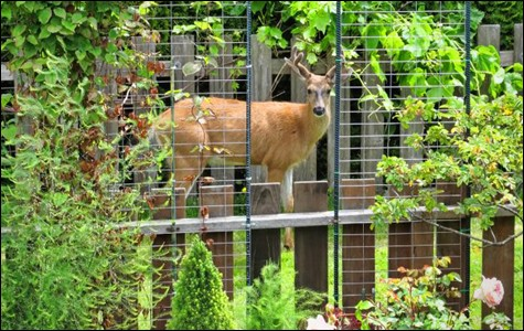 Eco Friendly Tips For Stopping Deer, Raccoons, And Squirrels From Munching  On Your Plants.