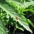 How To Grow Organic Pot