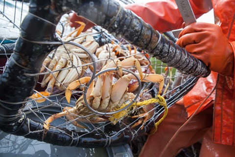 If bad weather persists, the biodegradable ropes that hold a pot closed will disintegrate, allowing the catch to escape.