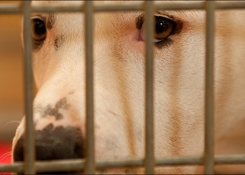 Is Oakland Animal Services Killing Too Many Dogs?