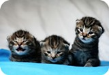 MATHIAS-ERHART/FLICKR (CC) - Just remember: kittens are still cute.
