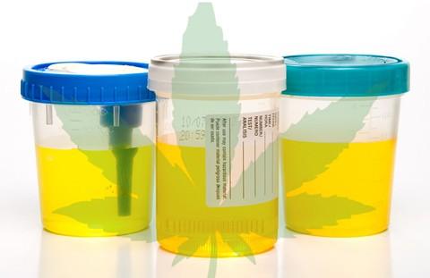 urine_test_piss_cups_marijuana.jpg