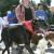 Berkeley East Bay Humane Society Holds Fifteenth-Annual Bay to Barkers
