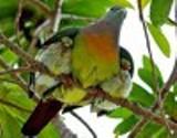 CC - Mother Bird