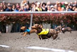 KIRA STACKHOUSE/NUENA PHOTOGRAPHY - Mr. Whiskey wins!
