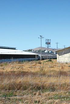 Petaluma Farms doesn't let its chickens roam freely outdoors.