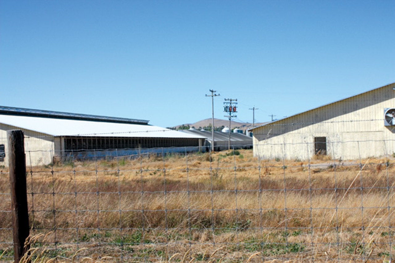 Organic Co-op Lowers Standards | East Bay Express