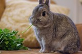 IAN ELWOOD - Rabbits dig, chew, and need lots of space to run and play.
