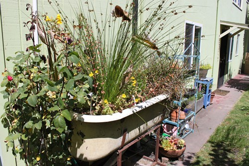 Recycled laundry water irrigates this bathtub bog.