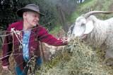 MATT SUMNER - Richmond City Councilman Tom Butt tends his own herd of goats and sheep.