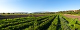 STEPHEN JOSEPH - Sunol AgPark is the only one of its kind currently operating in the area.