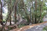 KATHLEEN RICHARDS - The Eucalyptus Grove behind VLSB: Isn't it pretty?