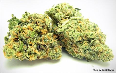mg_legalize_3529.jpg