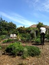 The Secret Garden is a working farm in addition to an urban oasis.