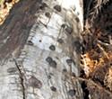 Apps for Oak Trees